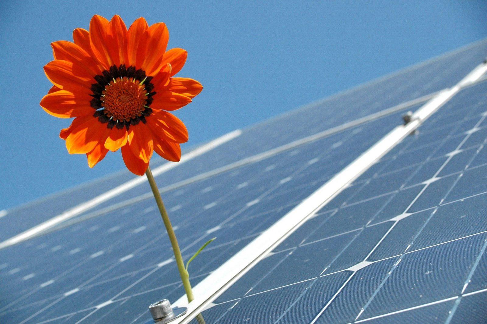 net zero solar power solar panel field installation